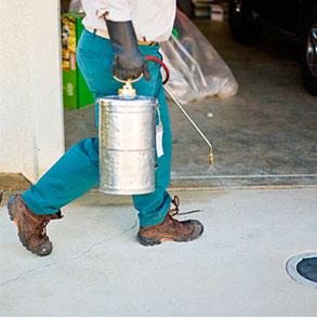 Hablan los expertos: El certificado de control de plagas además de obligatorio, es necesario