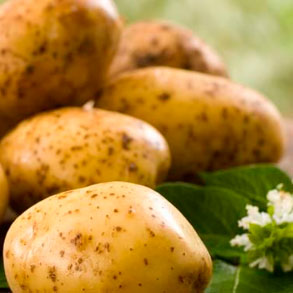 Variedades de patatas para hostelería