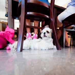 ¿Cómo promocionar tu bar entre los amantes de los perros?