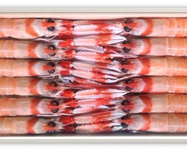 Mariscos Frescos. Cigalas Frescas. Distribuimos a todas España
