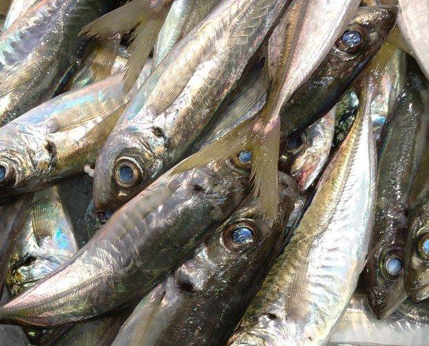 Pescado fresco. Ofrecemos una amplia variedad de pescado fresco