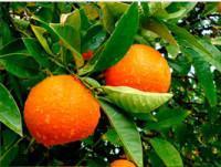 Para bares Naranja Barnfield