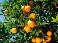 Para bares Naranja Chisslet