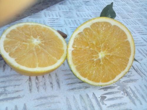 Naranjas.Proveedores de frutas