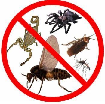 Control de plagas. Desinsectación, desratización, desinfección
