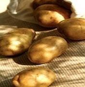 Patatas. Patatas de calidad