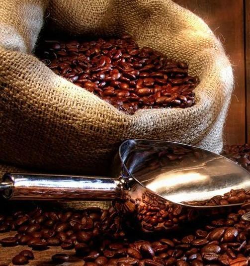 Café en grano. Proveedores de café
