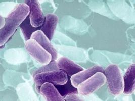 Para bares Bacterias