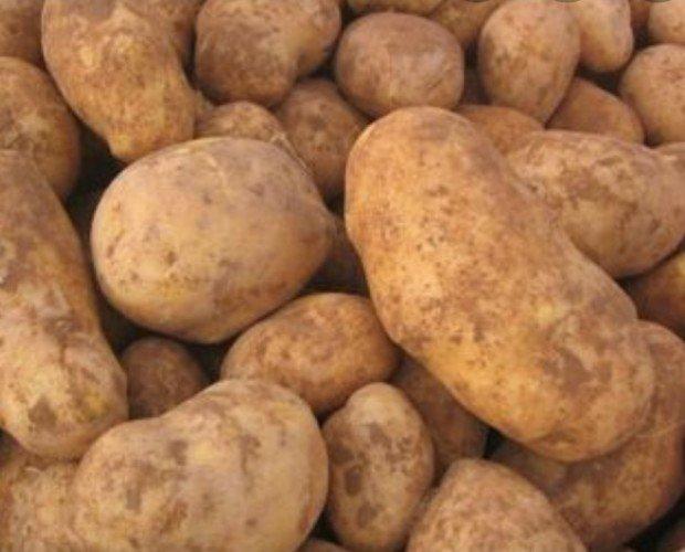 Patatas. Patata fresca