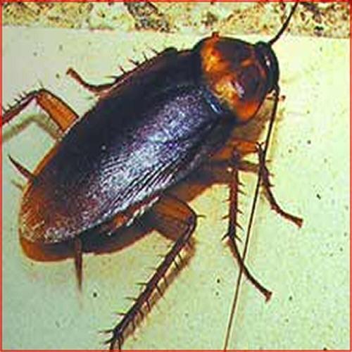 Desinsectación. Control de insectos arrastrantes y voladores.
