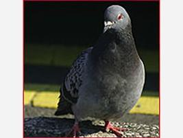 Para bares Control de aves