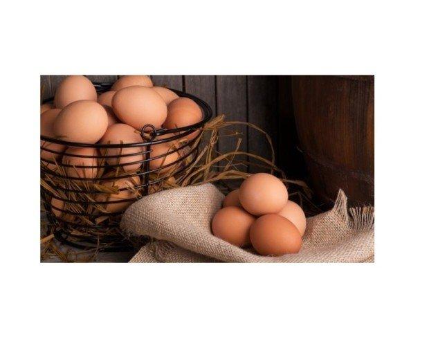 Huevos. Huevos Frescos Ecológicos. Nuestras gallinas son muy felices, están libres y gozan de una comida ecológico.