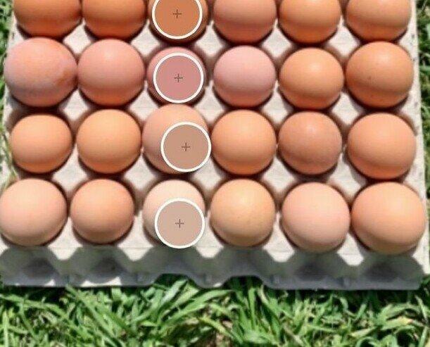 Huevos Camperos.Nuestros huevos presentan una gran variedad cromática de forma natural