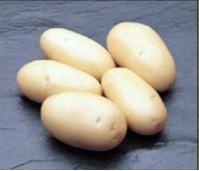 Patatas.Patatas de todo tipo.