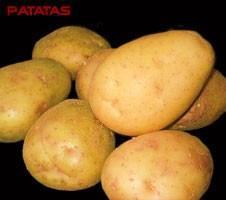 Patatas.Variada gama de tipos.