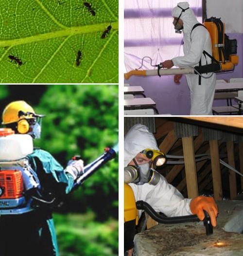 Fumigaciones. Servicios de fumigación y control de plagas