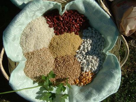 Legumbres. Legumbres, cereales y derivados