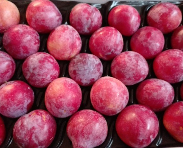 Ciruelas.Disponemos de una vasta gama de frutas.