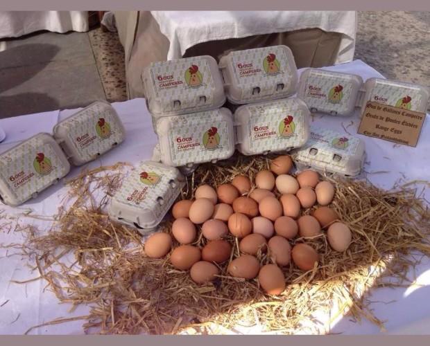 Huevos . Máxima calidad