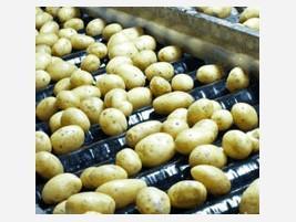 Proveedores patatas