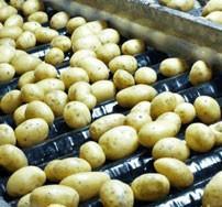 Proveedores patatas. Patatas tempranas o tardías según la estación