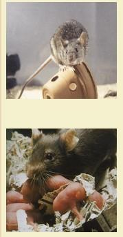 Fumigación y Control de Plagas.Desratización