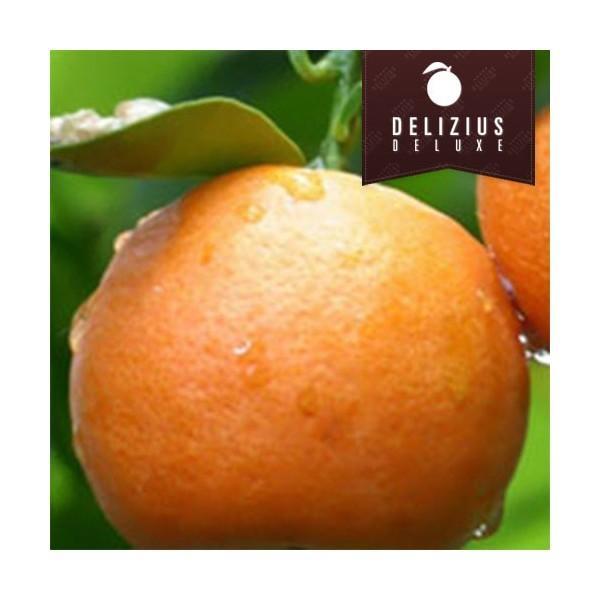 Naranjas deluxe. Deliciosas