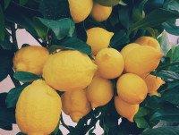 Para bares Limones