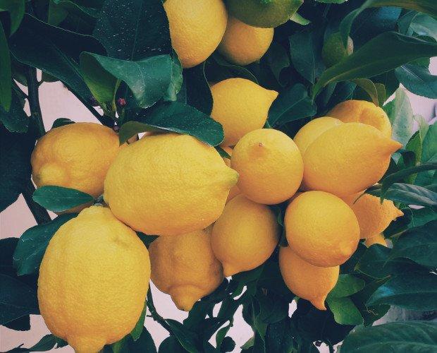 Limones. 15 kilos