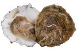 Productos del mar. ostras