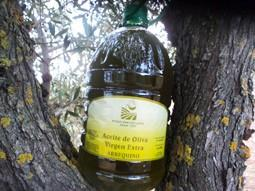 Aceite de Oliva. Elaborado a partir de moltura de aceitunas propias