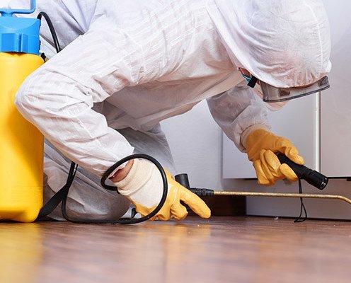 Control Integral de plagas. Detección, prevención y control