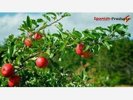 spanish-products-export-food