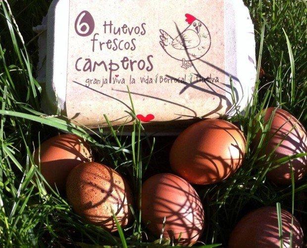 Huevos Camperos. Ofrecemos Huevos Frescos de Gallinas Camperas criadas en libertad