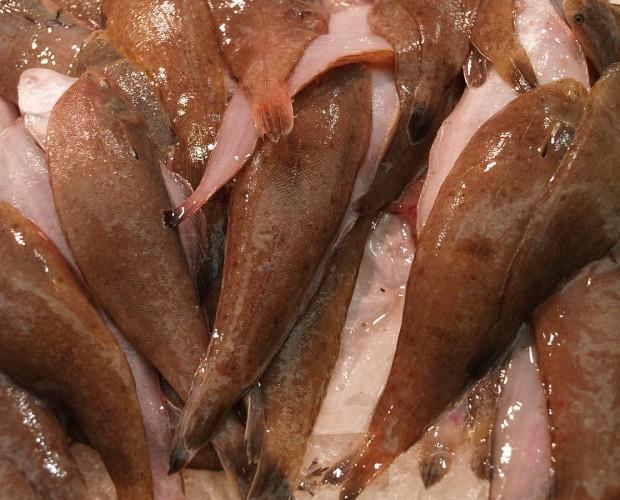 Acedia Sanlúcar. Proveedores de pescado