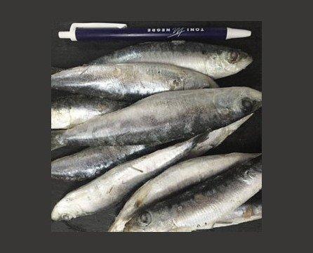 Pescado Fresco. Sardina Fresca. Los mejores orígenes para cada producto