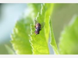 Para bares Control de plagas urbanas moscas