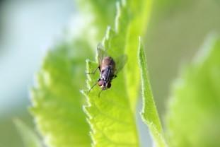 Control de plagas urbanas moscas. Cucarachas, roedores, moscas