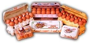 Huevos frescos. Huevos frescos de gallina y ovoproductos