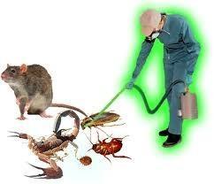 AGS. Control de Plagas Extremadura