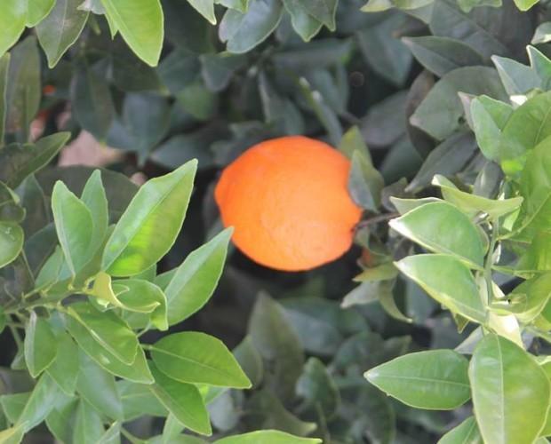 Frutas. Mandarinas. 100% natural 100% sabor