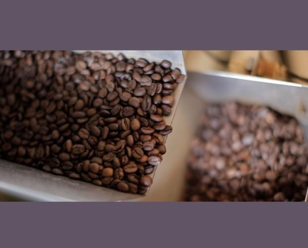 Cafe en grano segafredo. Selección de café en grano.