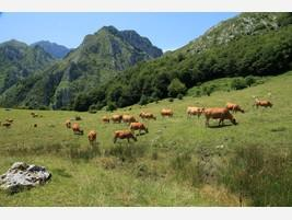 Nuestra ganadería