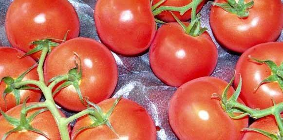 Hortalizas. Tomates