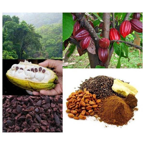 Cacao en Polvo.El mejor cacao en grano del mundo